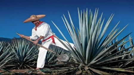 Tour del Tequila Tour